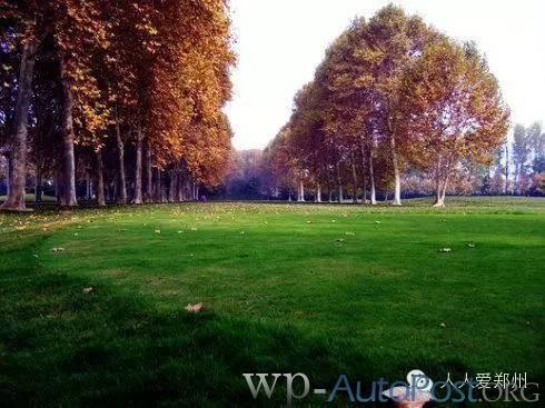 哇,原来郑州的秋天可以这么美!