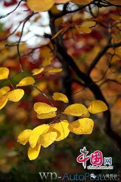 收藏!郑州人秋天出游赏红叶最佳景点