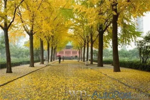 好美!郑州人民公园的秋色