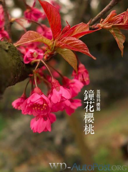 三月花开:郑州公园的这些花你都认识吗?