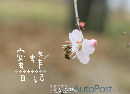 随手拍丨郑州大学校园的那些花儿