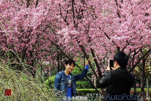 郑州的春天,犹如一座春城